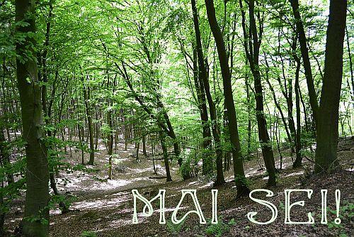 Wald im Mai
