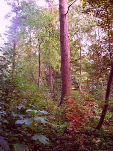 Wald im frühen Herbst